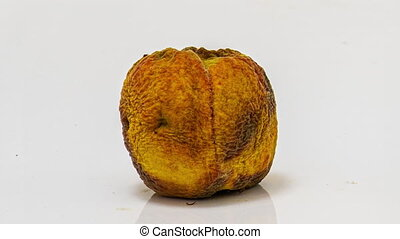 The mold on the surface of food gray fur, white dust, velvety circles, and furry growth on the surface of fruit, the concept of the origin and development of life, symbiosis