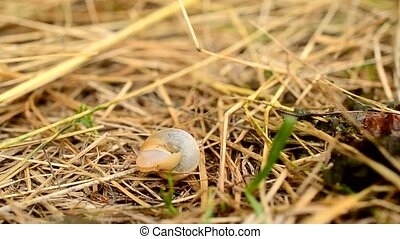 Time lapse of snail coming out of shell and crawling away on...