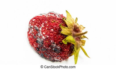 Time lapse of strawberries rotting over white background. macro