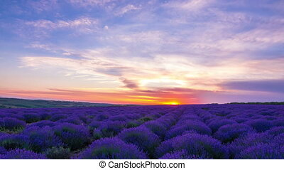 Sunset Over A Field Of Lavender
