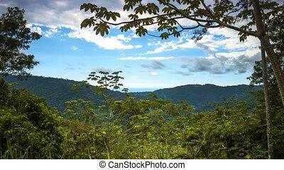 Time Lapse, Reserva Forestal Golfo Dulce, Costa Rica,...