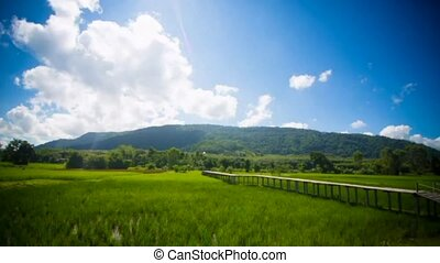 time lapse rice field and cloud