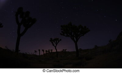 Star Trails in Joshua Tree National