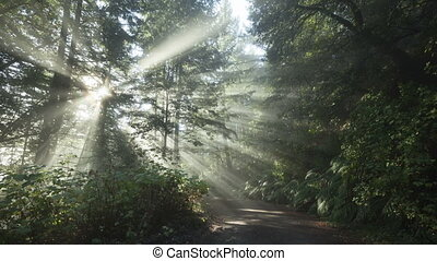 Time lapse sun rays forest - Time lapse radiant sun beams in...