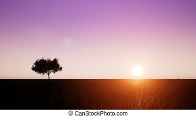 Time-lapse sunrise with tree