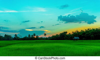 Time lapse sunset and little cottage in the rice field in evening.