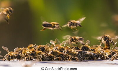 Time lapse. Swarm of Bees Fighting With Aliens