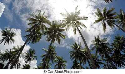 Time lapse . The bottom view on palm trees against the background of blue solar the sky with moving white clouds