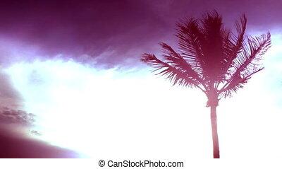 Time lapse tropical with light leak - Florida Keys palm tree...