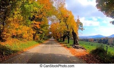 Time Lapse - Walking Under Trees in Full Color During Fall in Vermont.
