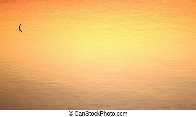 Time lapse: water surface at sunset