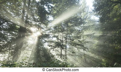Time lapse zoom sun rays forest - Time lapse zoom out...