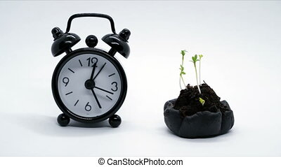 Time passing concept Clock walking near plants growing, Timelapse moving fast.
