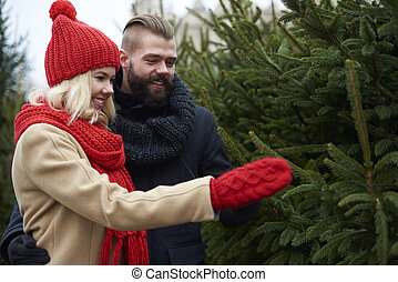 Time to choose the perfect Christmas tree