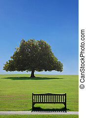 Time to reflect - Empty park bench facing a large tree