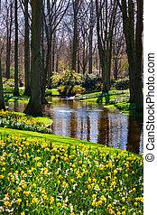 time., wiosna, park, tło