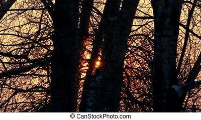timelapse, закат солнца, зима, лес