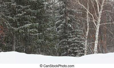 timelapse, -, зима, снегопад, лес