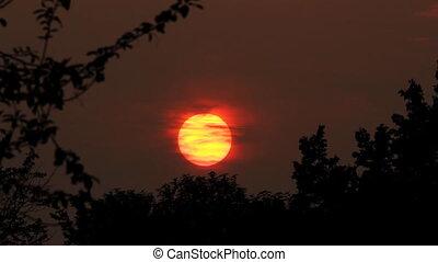 timelapse, лес, закат солнца, над