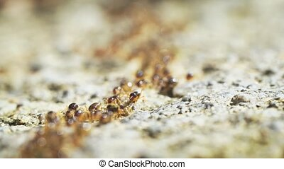 Timelapse Abstract of Terrestrial Termites Swarming on the...