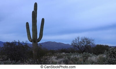 Timelapse at sunset of the Sonoran Desert