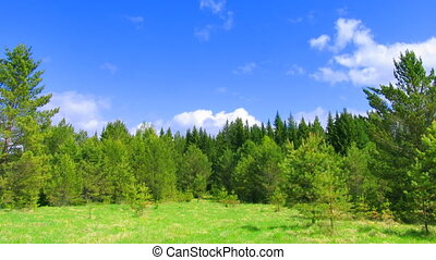 timelapse clouds and summer forest