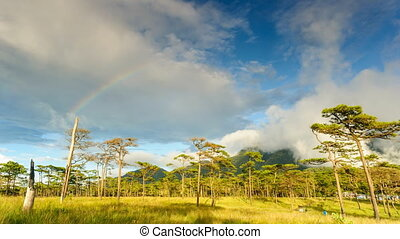 Timelapse, cloudscape and rainbow after rain in rainforest, Thailand.
