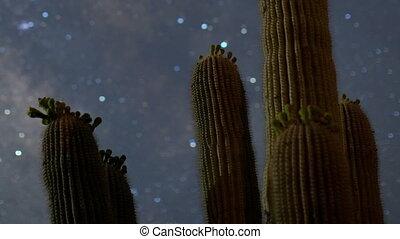 timelapse, de, estrelas, à noite, com, um, cacto, em, a, primeiro plano