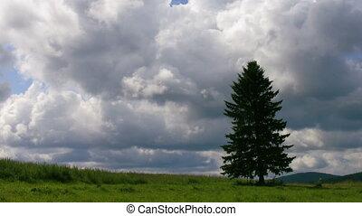 timelapse field tree clouds