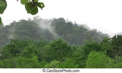 (timelapse) Fog Rising From Tropica - The time lapse video...