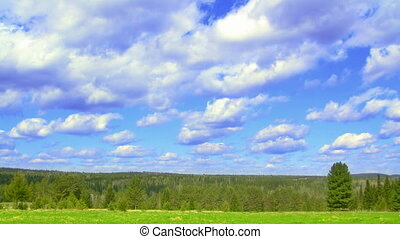 timelapse nature scene green field, coniferous forest, and flying clouds, Progressive scan