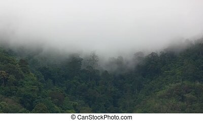 Timelapse - Hill covered with rainforest and rain clouds.