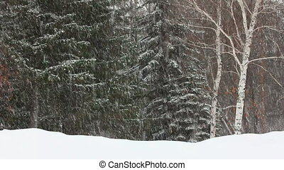 timelapse, -, hiver, chute neige, forêt