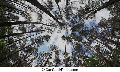 Timelapse in the summer forest