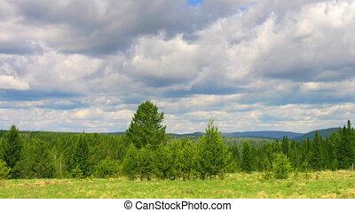 timelapse nature scene forest sky - timelapse summer nature...