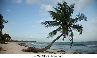 timelapse of a perfect paradise beach with a lone palm tree, mexican caribbean coast