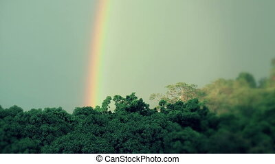 Timelapse of a rainbow forming over a tropical evergreen...