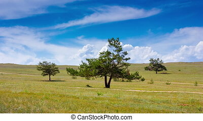 Timelapse of an idyllic landscape. Three trees in the field, blue sky and clouds