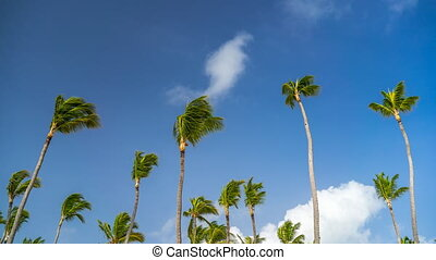 Timelapse of clouds in a blue sky over palm trees in...