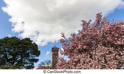 Timelapse of clouds spring season