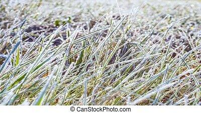 Timelapse of frost on grass melting in the morning sunlight