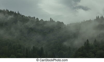 Timelapse of misty fog blowing over mountain with clouds passing by pine tree forest