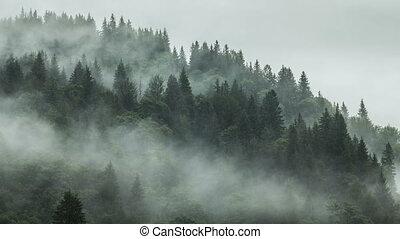Timelapse of misty fog blowing over mountain with pine tree forest with rain on a background.