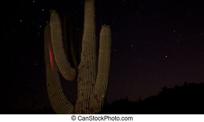 timelapse of stars at night with a cactus in the foreground