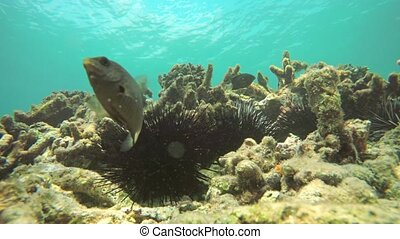Timelapse of Wild Sea Urchins and Tropical Fish in Thailand