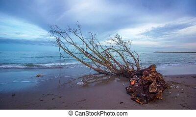 Timelapse on the shore of the sea at sunset with a tree trunk forward