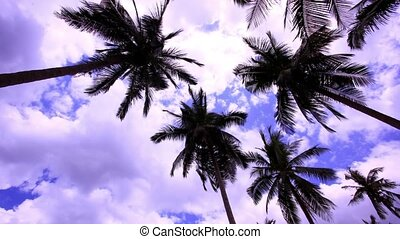 Timelapse palms at blue sky background with clouds. HD. 1920x1080