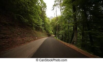 TIMELAPSE POV Driving In Forest