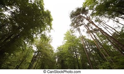 Timelapse POV In Forest