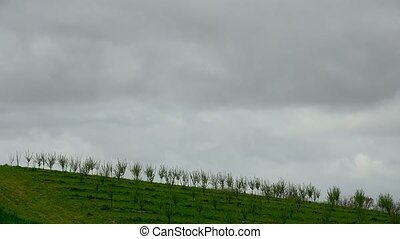 Timelapse, Rows of plum trees in spring morning and rain...
